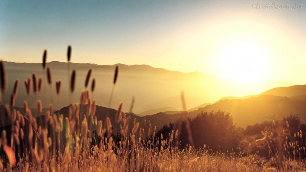 trigo-papel-de-parede-sol-nascendo-no-campo-117185-1024x575