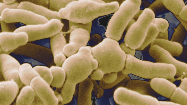 sn-microbiome_0