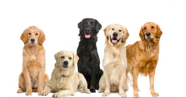 Perros, cáncer e investigación .