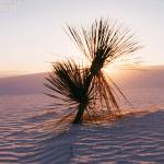 Prevención cáncer de piel sam-bloom-342809-unsplash