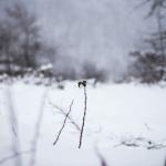 La soledad del paciente Foto: Orkhan Farmanli on Unsplash