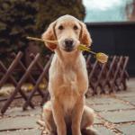 Terapia asistida con animales Foto:Richard Brutyo on Unsplash
