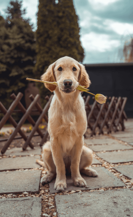 Terapia asistida con animales Foto: Richard Brutyo on Unsplash