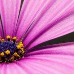 Mamografía: prevención y diagnóstico de cáncer de mama Foto James Lee on Unsplash